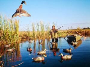 Особенности охоты на гусей и уток